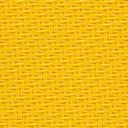 0505 Canary